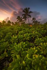 Poipu (Eddie 11uisma) Tags: poipu kauai hawaii sunset