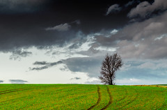 After the Storm - IN EXPLORE (emanuelezallocco) Tags: storm cloud hills landscape nature alone tree green
