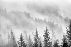 I love it when the sky does this (Ben McLeod) Tags: bw blackandwhite mthood fog mist snow snowstorm trees