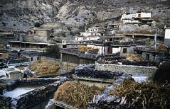 TREKKING ANNAPURNA.. (lupus alberto) Tags: nepal himalaya marpha circuitoannapurna