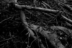 DESTRUCTION 5/6 (paulrichardschulte) Tags: photography photographer photographers blackandwhite bw dark mood woods forest wood trees tree branches leafs photo photoart photoartist fineartphoto fineartphotography bwphoto destruction paulrichardschulte
