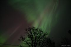 DSC_5352.jpg (marius.vochin) Tags: lights night sky stockholm longexposure amasing northenlights