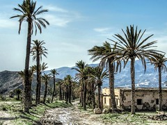 Egypt in Spain (CosmoClick) Tags: wow exodus andalusia palm palmtree landscape egypt cosmoclicky cosmoclick