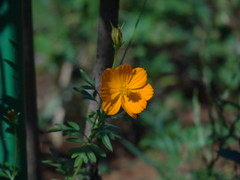 DSC00183 (familiapratta) Tags: sony dschx100v hx100v iso100 natureza flor flores nature flower flowers