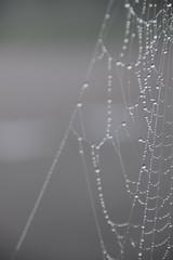 Mist en spinnenweb (Sandra van Zanten) Tags: grijs grey spinnenweb mist fog nature weer