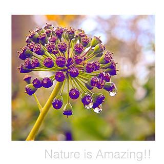 Nature is inspiring