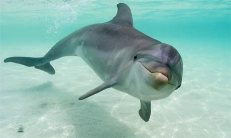 Delfinārijs, Lietuvā