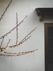 Yoshinoyama 吉野山. Japan (H.L.Tam) Tags: japan cherryblossoms sketchbook deptheffect iphone 吉野 iphoneography yoshino street iphone7plus documentary yoshinoyama streetphotography sakura 吉野山 photodocumentary