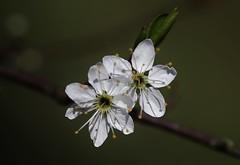 Flower (Hugo von Schreck) Tags: hugovonschreck flower blume blüte macro makro fantasticnature canoneos5dsr