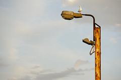 Lightpost (Macr1) Tags: 61403327236 australia avian bird camera conditions corroded corrosion d810 day default filters itemcondition lens light lightpost location markmcintosh miscellaneous nikon nikond810 nikongpsunitgp1a old outdoor oxidation rust rusted seagull tamron70200mmf28spdivcusd urbandecay wa westernaustralia macr237gmailcom ©markmcintosh
