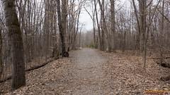 Parc à Gatineau au printemps - 2723 (rivai56) Tags: parc à gatineau au printemps canada québec