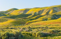 Late afternoon sun on the hills (Photosuze) Tags: landscape california carrizoplain hills flowers spring trees grass sky
