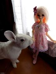 Ribes & Poppy (* Snowflakes *) Tags: ribes poppy bjd espree bobobie resinsoul ball jointed doll balljointeddoll dolls bambole bambola resina bunny rubbit coniglio bianco