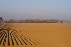 Potatofield (Xtraphoto) Tags: landschaft landscape kartoffelacker acker acre kartoffelfeld potato feld fiel morgenlicht morgensonne morgenstimmung sunrise sunlight morningsun morninglight morgen morning