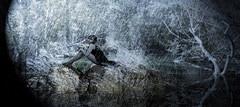 Rain 3 (Poli Maurizio) Tags: sony sonydsch200 disegno art abstract painting sculpture museum gallery virtual artist master famous canvas painter collection drawing impressionism naturalism renaissance expressionism realism baroque sketch garden portrait autumn flower light nature sky spring summer indoor travel water woman yellow blue black white color movement figure macro photo object fine unlimited still life mattepainting fantasy fantastic facebook twitter linkedin pinterest instagram tumblr outdoor atmosferic watercolor technique surrealism digitalart 3dweddingpartyfamilytravelfriendsjapanvacationlondonbeachcaliforniabirthdaytripnycsummernatureitalyfrancemeparisartflowerssanfranciscoeuropechinaflowernewyorkwaterpeoplemusiccameraphone 3daustraliachristmasusaskygermanynewcanadanightcatholidayparkbwdogfoodsnowbabysunsetcitychicagospaintaiwanjulybluetokyoenglandmexicowinterportraitgreenred 3dpolimaurizioartworkredfunindiaarchitecturegardenmacrospringthailandukseattlefestivalconcertcanonhouseberlinhawaiistreetlakezoofloridajunemaywhitevancouverkidstreecloudstorontobarcelonageotaggedhome 3dbwbwdigitalseadaytexasscotlandcarlighthalloweencampingchurchanimalstreeswashingtonrivernikonaprilbostongirlirelandgraffitiamsterdamrocklandscapeblackandwhitecatsnewyorkcitysanromeroadtripurbanhoneymoonocean 3dwatercolorsnewzealandmarchblackmuseumyorkhikingislandmountainsyellowsydneysunhongkongshowgraduationcolorfilmmountainanimallosangelesschoolmoblogphotodogs 3dartdesigndisegnosiciliacalabriabasilicatacampaniamarcheabruzzomoliselaziotoscanaemiliaromagnalombardiavenetofriuliveneziagiuliapiemontevalledaostaliguriatrentinoaltoadigepuglia 3dlandscapepaesaggiolunasolemarenuvolecittàtramontoalbamontagnecollinenebbialuceautomobilearredamentointerniesterninaturamortacieloragazzadonnauomobambinofruttabarca 3dcanigattirinascimentomodelbarocconaturalismomattepaintingfuturismoastrattismocubismosurrealismorealismoiperealismoclassicismorococomanierismoromanticismoimpressionismogiocovirtualepesc
