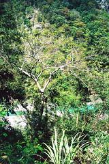 榮華攔水壩_5 (Taiwan's Riccardo) Tags: 2017 taiwan 135film negative ps fujifilmrdpiii plustek8200i rolleiq35t rolleilens hft vario zoom apogon 3890mmf2856 北橫 復興鄉 桃園縣 榮華攔水壩