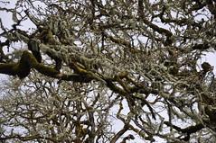 Bald Hill Farm Field Tour (NRCS Oregon) Tags: bald hill farm willamette valley oregon nrcs naturalresourcesconservationservice usda restoration fenders blue butterfly prairie habitat greenbelt land trust corvallis benton county oak woodlands