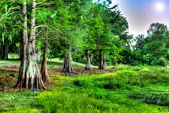 """Stand of Brothers"" IMG_6478 (DanGibsonPhotography) Tags: sky blue plants weeds nature natural limbs green beautiful"