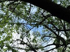 IMG_7341_Fotor01 (Ela's Zeichnungen und Fotografie) Tags: hannover landschaft natur tier eichhörnchen baum äste blätter sonnenlicht himmel wolken