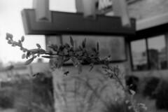 2017-04-23_6 (frasiec) Tags: kentmere400 canoneoselan7e reflectarubyscan