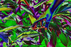 IMG_4034 (arthurpoti) Tags: glitch glitchart art artist artista vanguard databending brasilia ensaio model beautiful girl colourful color stoned lisergic lsd colour cores colorido impressionism unb universidadedebrasilia subjetividade