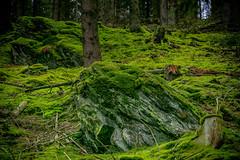 DSC4768 (ste.wi) Tags: perlenbachtal eifel germany nrw green nature outdoor deutschland springtime frühling wald sony ilce6000 alpha6000 55210mmf3556oss