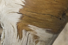 Wooden Leg (brucetopher) Tags: driftwood animal mimic fur leg striations hair soft smooth shiny pattern nature natural knee