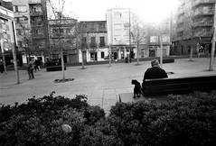 At the bench (gborgskij) Tags: nikon ft2 20mm kentmere 100 alicante dog man smoke film analog spain trip hc110 dilution b 6min 35mm sun