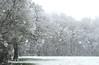 25. April April - Frühling hält Einzug - Geäst im Schneegestöber (35)