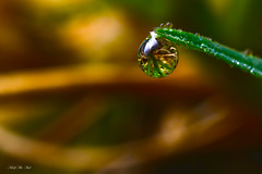 Macro Photography (Adolf Abi-Aad) Tags: waterdrop