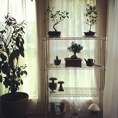 New home for the plants. It should be high enough to protect from cat attacks, but only time will tell. (stephanie gurne) Tags: square squareformat rise iphoneography instagramapp uploaded:by=instagram