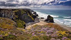Bedruthan Flora (explored) (yadrad) Tags: cliff beach coast thrift coastline nationaltrust pinks corwall bedruthansteps carnewas bedruthen seapinks