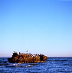 Seagulls' Rock, Mentone Beach (faVori rouge) Tags: road sea sky sun color 6x6 beach rolleiflex sand iii bond epson fujifilm sl66 imaging menton rdp adobergb v700 silverfast