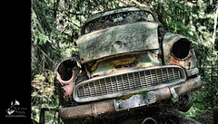 The Car Cemetery (geirkristiansen.net.) Tags: old autumn red urban white bus tree classic abandoned nature cemetery graveyard car trash forest vintage lost book moss woods junk nikon rust moody ride sweden decay interior secret exploring wheels picture rusty cover forgotten rusted vegetation bil vehicle sverige title rotten wreck derelict vestre trespassing urbanexploring ue interestingplaces skrot urbex carcemetery gammel rusten tapt tcksfors forlatt forfall steder delagt smashedup glemt bstns d700 naturetakesback fgelvik nikond700 2470mmf28g bilkirkegrd vstrafgelvik forlattesteder portraitofaclassic