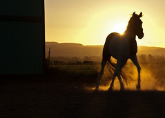 (joeysoliver) Tags: sunset horse oregon scappoose