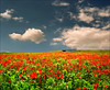 Wild Field (Katarina 2353) Tags: bridge light red wild summer sky flower green nature field grass clouds landscape photography photo nikon europe day peace open image time space serbia great paisaje have valley poppies paysage vojvodina srbija pannonia srem pejzaž katarinastefanovic katarina2353 gettylicense serbiainspired