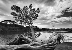 American River [Explore Sep 25 #57] (Mariasme) Tags: blackandwhite monochrome river southaustralia sweep kangarooisland waterscape americanriver gamewinner matchpointwinner 15challengeswinner friendlychallenges fotocompetition fotocompetitionbronze yourockwinner gamex2winner herowinner ultraherowinner thepinnaclehof gamex3 pregamewinner favescontestfavoriteson favescontesttopseed favescontestfavored tphofweek223 f64g55r1win mpt382