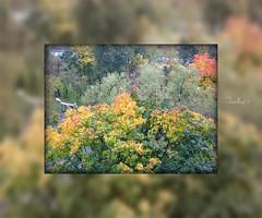 Autumn Kaleidoscope. (tarelkaz1) Tags: autumn trees green moscow memories topshots flickraward photosandcalendar natureselegantshots naturethroughthelens sonydscs730 theoriginalgoldseal mygearandme ipiccy