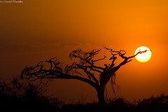 "Tramonto a Tsavo Est - Kenya • <a style=""font-size:0.8em;"" href=""https://www.flickr.com/photos/63857885@N08/10096996774/"" target=""_blank"">View on Flickr</a>"