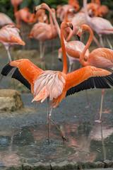 birds birdpark