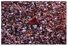(Arianna Viola) Tags: morning light sea summer italy shells film analog sunrise 50mm dawn morninglight seaside nikon walk earlymorning naturallight shore silence riccione peacefulness nikonfg20 summermorning
