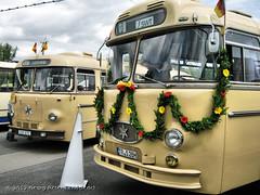 Henschel HS 160 OSL - Baden-Baden 231 & Henschel HS 160 OSL-G - Trier 28 - Solingen_2785_2012-06-30 (linie305) Tags: bus classic buses vintage busse trolley transport oldtimer badenbaden sws autobus 60 osl omnibus trier trolleybus solingen jahre obus jubiläum stadtbus henschel stadtverkehr 60jahre citytransport oslg stadtwerkesolingen oberletungsbus hs160 60jahreobus 60jahreoberleitungsbus