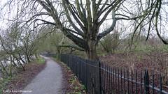 January 3rd, 2014 Towpath to Tesco (karenblakeman) Tags: uk trees thames reading january towpath 2014 2014pad
