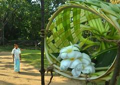 Pahan Maduwa (mithra srilanka) Tags: sarong araliya gokkola pahanmaduwa pahanpelashed