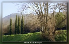 Landscape (Rodolfo Bontempi photos (800.000 views)) Tags: trees panorama tree film colors alberi analog landscape photography photo nikon focus soft flickr foto awesome famous great photographers cielo analogue f80 fotografia albero piante prato paesaggio tr analogica 135mm fotografi formato pellicola fotoartistiche famosi rodolfobontempi