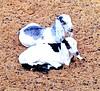 صداقة (*صديق الضوء*) Tags: animal children goat goats المزرعة غنم بهم uploaded:by=flickrmobile colorvibefilter flickriosapp:filter=colorvibe
