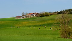Le Saulgy (Meinrad Prisset) Tags: schweiz switzerland countryside nikon suisse paysages swizzera cantondefribourg districtdelaglne nikond800 afsnikkor70200f4edvr lesaulgy