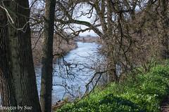DSC_5924.jpg (susanm53@verizon.net) Tags: trees landscape serene river tuolumneriver