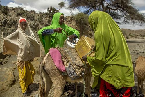 Somaliland_Mar17_3373 (1)