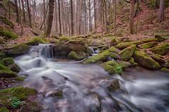 flowing water (ddimblickwinkel) Tags: nikon tokina d90 art nature natur water wood forest germany deutschland sachsen dresden bea